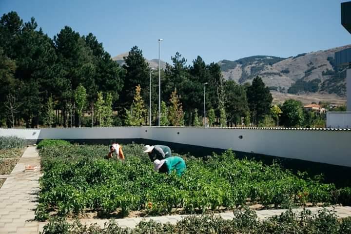 Kopshtet komunitare të Parkut japonez  jo vetëm atraksion
