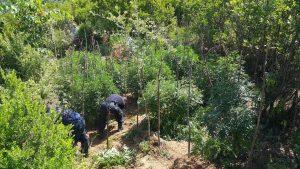 5 të arrestuar në Gjirokastër për drogë e armë pa leje