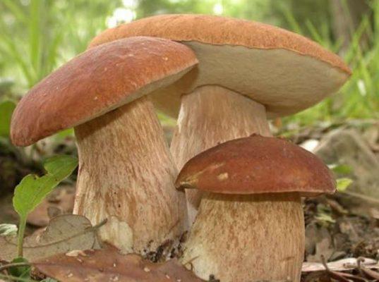 """Përbërësi i """"kërpudhave magjike"""" që mund të trajtojë problemet e shëndetit mendor"""