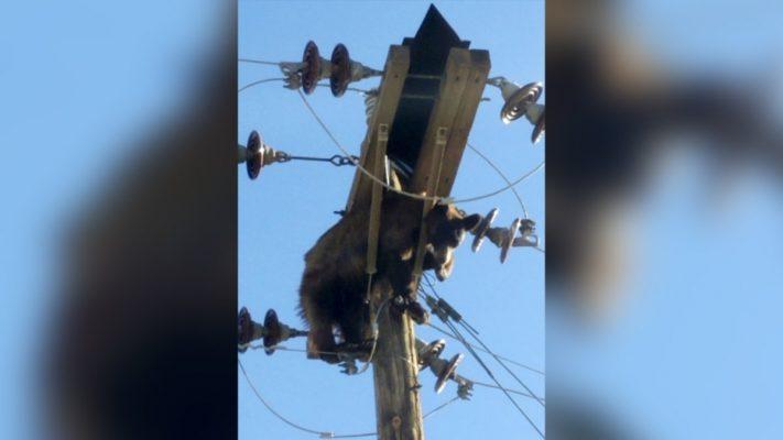 Ariu ngec në një shtyllë elektrike, qyteti pa energji elektrike