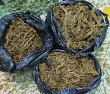 Sekuestrohen rreth 16 kg lëndë narkotike cannabis/ Arrestohen 2 persona në Elbasan